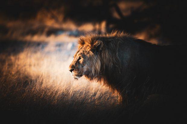 alessandro-bosio-travel-viaggi-reportage-etosha-national-park-namibia-2017