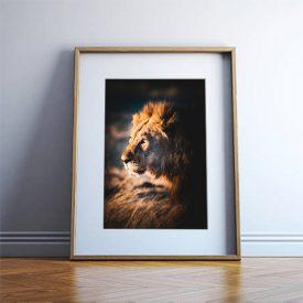 alessandro-bosio-travel-viaggi-reportage-lion-leone-namibia-etosha-print-stampa-fotografica-fine-art-cornice